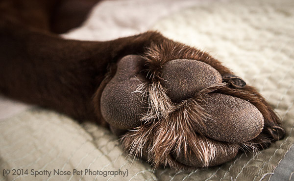 Details-Paws-52-Project