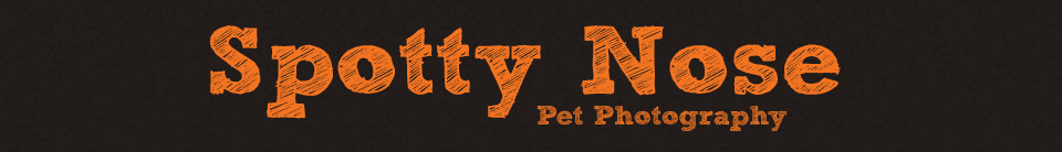 Spotty Nose Pet Photography Web Site logo